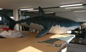 Надуваема Голяма бяла акула в реални размери